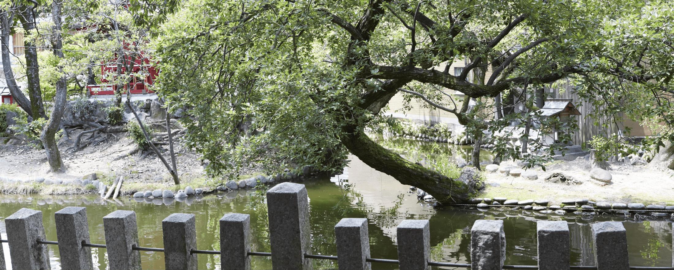 たくさんの生き物たちが暮らす弁天さんのお池。